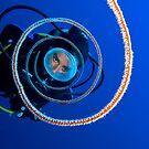 Dive, Dive, Dive by Carlos Villoch