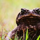 Angry Toad by marvinvantonder