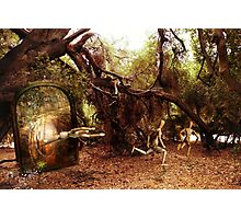 out of the woods Photographic Print