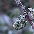 Morning Frost by Crin