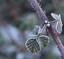 Morning Frost by Corrine Symons