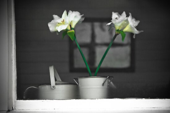 Lillies by Charles Plant