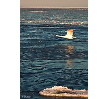 Duk - I´m Flying low...... Photographic Print