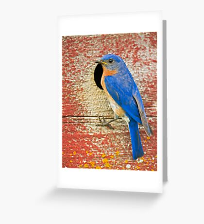 Got the Blues Greeting Card