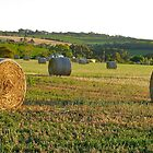 Hay bales @ dawn 2 by Ali Brown