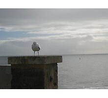 Gull at Busselton Pier Photographic Print