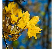 yellow leaf Photographic Print