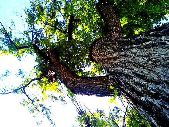 Tree in Prescott by Regan Hansen