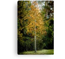 Aflame Canvas Print