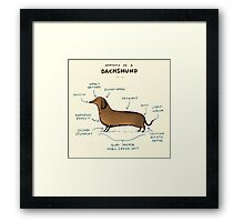 Anatomy of a Dachshund Framed Print