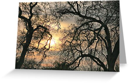 A Winter Glow by Barbara  Brown