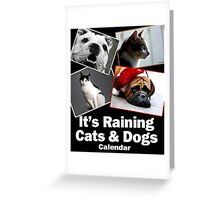 It's Raining Cats & Dogs - Calendar  Greeting Card