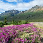 When it's Spring Time - Yukon Territory ` Canada by Barbara Burkhardt