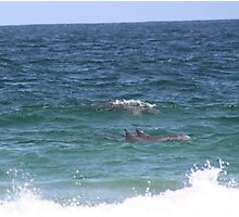 Dolphins at Zenith Beach Photographic Print