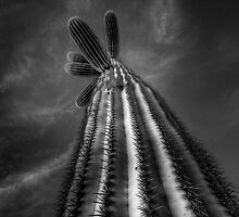 Long Tall Cactus by Bob Larson