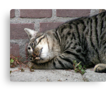 Neighbour cat feeling at home Canvas Print