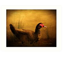 Maurice the Muscovy Art Print