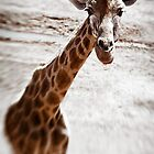 On safari with my baby by JimFilmer