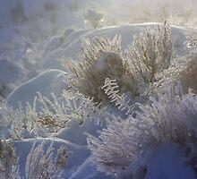 Winter Wonder by Arla M. Ruggles