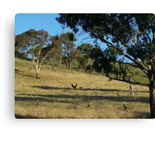 Just before dusk, south of Cook in Canberra.- Australia. Canvas Print