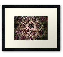 Rock Rose Framed Print