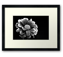 Black and white Chrysanthemum Framed Print