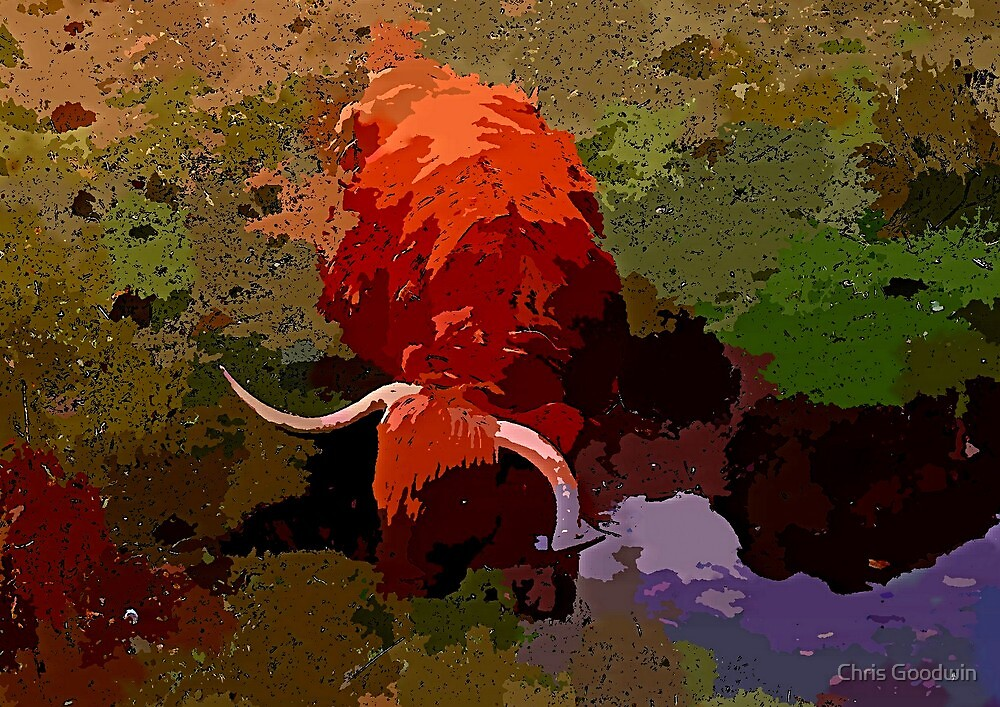 Highland Cow by Chris Goodwin