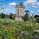Lismore Castle gardens by Martina Fagan