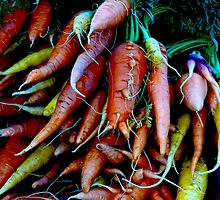 ORGANIC SMALL FARM CARROTS (WHITEFISH FARME SERIES) by Thomas Barker-Detwiler