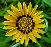Symmetry In Yellow by stevealder