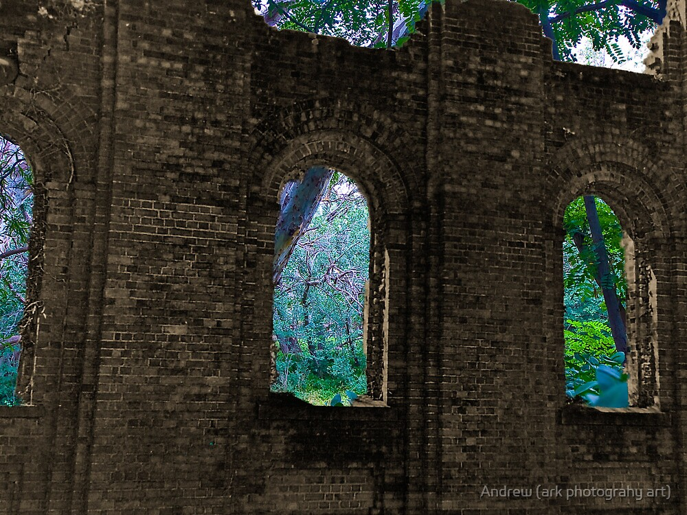 Forest Wall by Andrew (ark photograhy art)