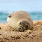 monk seal sleeping on beach  by Flux Photography