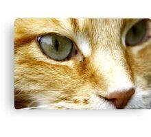 Macro Cat! Canvas Print