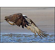 Osprey 360 Photographic Print