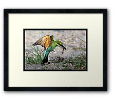 Rainbow Bee-eater 406 Framed Print