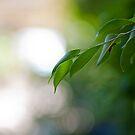 Calm Garden by Steve Christides