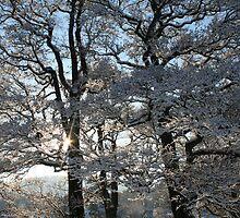 Snowy treescape. by Amanda Gazidis