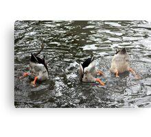 Duck Tails Metal Print