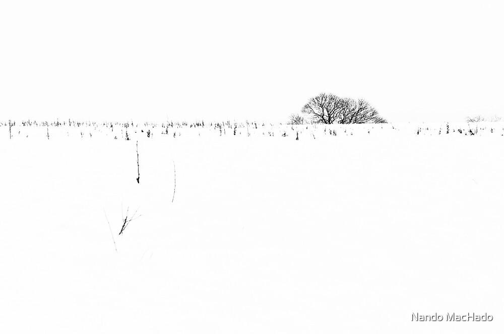 White by Nando MacHado