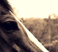 Sepia Horse -Littlewolf Images  by littlewolf