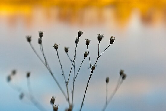 Gone to Seed by Lynn Wiles