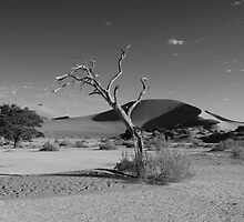 dead tree at Sossusvlei by mike parker