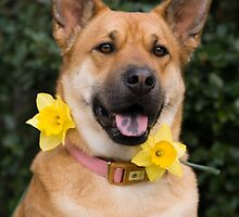 Happy Birthday dog with yellow flower in collar by laurenmacphotog