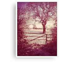A bit late for Christmas Canvas Print
