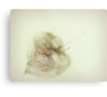 Just a shell..... Metal Print