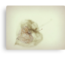 Just a shell..... Canvas Print
