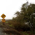 Winding Levee Road by Barbara Wyeth
