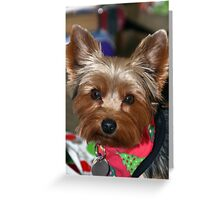 Duke in Holiday Bandana Greeting Card
