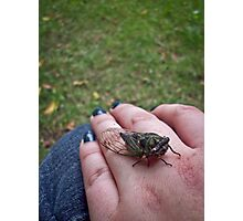 Cicada's Friendly Resting Spot Photographic Print