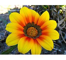 Blushing yellow Photographic Print